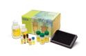 Bio-Plex Pro™ Human Cytokine, Chemokine, and Growth Factor Assays image