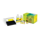 Bio-Plex Pro™ RBM Apoptosis Multiplex Assays image