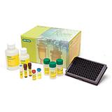 Bio-Plex Pro™ Human Inflammation Assays image cover