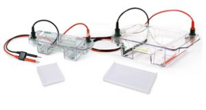 Horizontal Electrophoresis Systems image cover