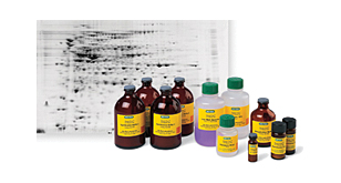 Handcast Acrylamide Gel Reagents image cover